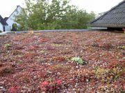 Bernd-Formann-Galabau-Neuanlage-und-Umgestaltung-von-Vegetationsflachen-5