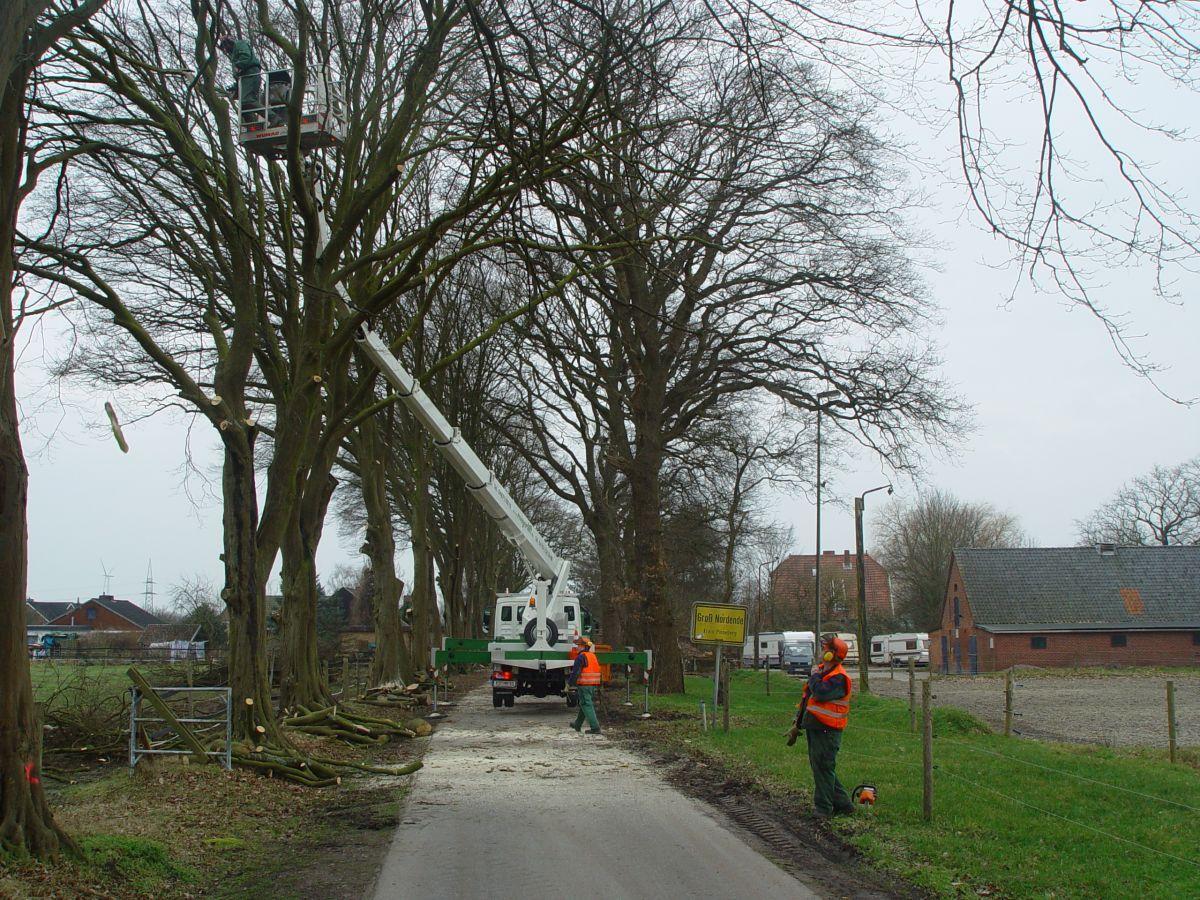 Bernd-Formann-Galabau--Baum-Hecken-und-Geholzschnitt-1