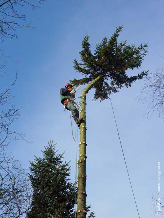 Bernd-Formann-Galabau--Baumarbeiten